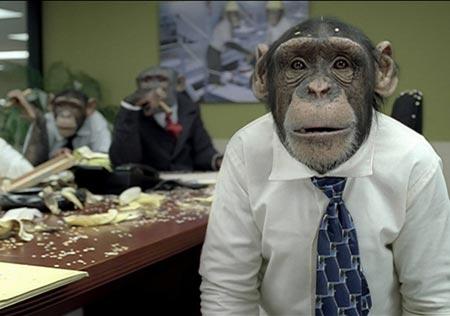 simios en la oficina