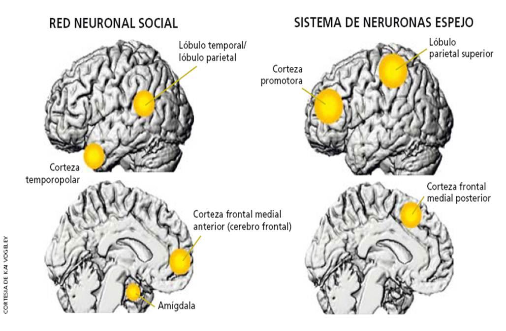 Empatia trabajar en los ni os as sobre las neuronas for Espejo que no invierte la imagen